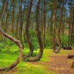 Лес Хоя-Бачи