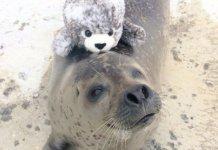 тюлень обнимает игрушку